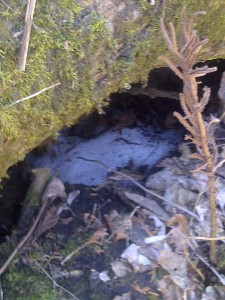 Still snow near the tree roots.