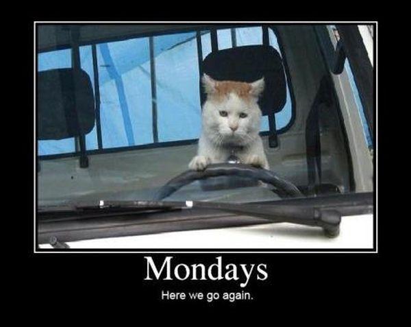 car-humor-funny-joke-road-street-drive-driver-mondays-cat.jpg